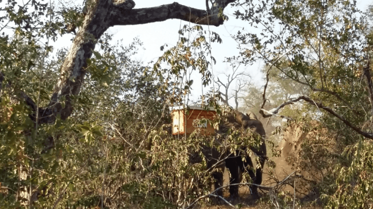 Beehive hanging from a tree branch with elephant standing nearby without approaching the tree