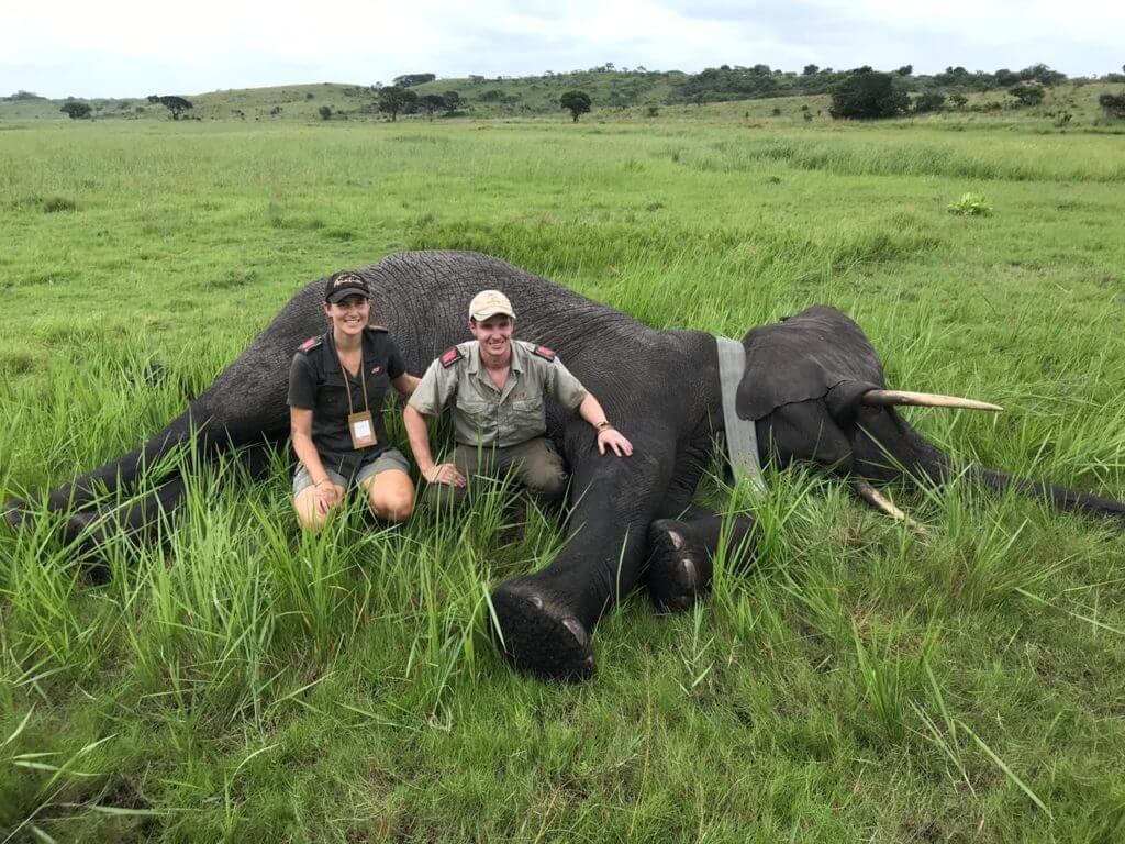 Elephants-Alive