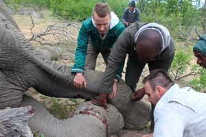 Elephant Help