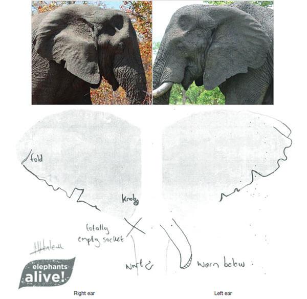 Elephant Info