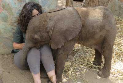 Rescue baby elephants