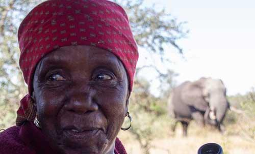 Elephant and Gogo