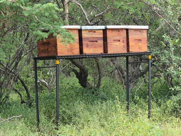 4 beehives on steel stands